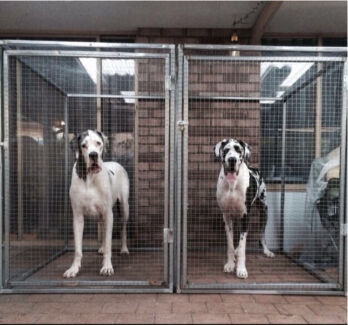 2 x crate / cages to suit Great Dane $300 each $500 both  Cooloongup Rockingham Area Preview