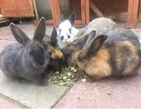 3 months old Rabbits for Sale!
