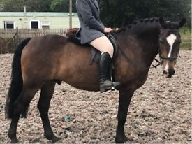 Horse for share/loan