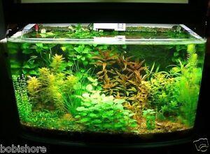 Free Post Australia Mixed Aquarium Seeds Fish Tank Pond Plant Seed | eBay