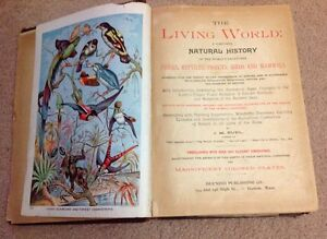 Antique Book: 'The Living World' 1889