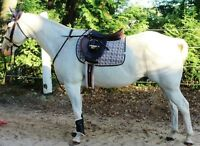 PART BOARD: 13 y/o paint gelding.