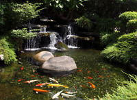 Pond cleaning. Openings and Closings