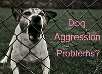 Don't accept SERIOUS dog problems! Get Expert Help right now!