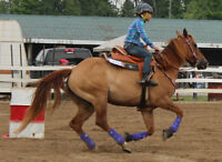 Quarter Horse trained for all disaplines