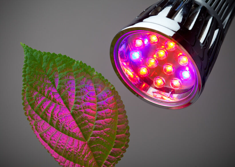 Top 5 Reasons To Purchase LED Grow Lights