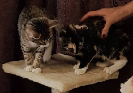 Rescue kittens need forever homes