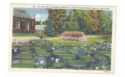 Mo St Louis Missouri Linen Post Card Tower Grove Park Blooming Tropical Lilies
