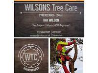 Wilsons TREE CARE