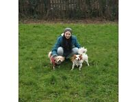 Walk n' Fetch - Reliable and experienced dog walking and pet sitting