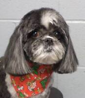 Happy Tails Professional Dog Grooming