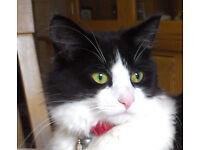 Lost Cat From Cheshunt, Hertfordshire, EN7