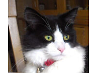 Missing Cat from Cheshunt
