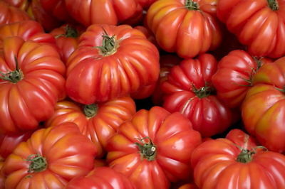 Genovese Seeds (TOMATO COSTOLUTO GENOVESE (15 SEEDS) Beefsteak tomato with a meaty texture!)