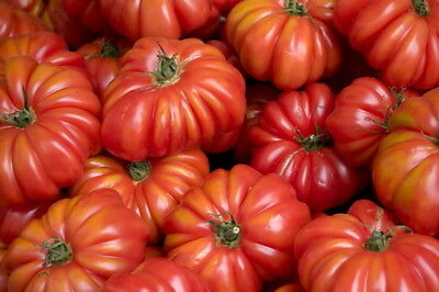 Genovese Seeds (TOMATO COSTOLUTO GENOVESE (15 SEEDS) Beefsteak tomato with a meaty texture! )