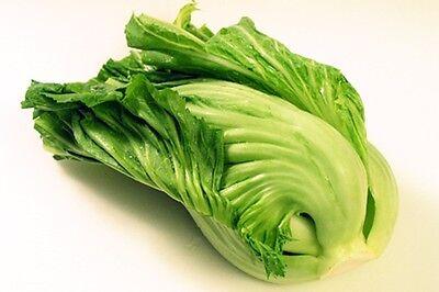 Chinese Indian Mustard (Gai choy, Gai choi) Cabbage Seeds