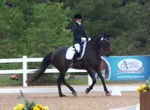 Horses groomed and braided - Dressage and Jumper