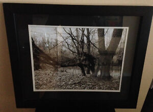 IKEA - Black & White Nature Art Hanging Framed Wall Print (RARE)