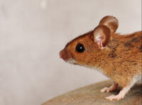Pest Control and Wildlife Removal