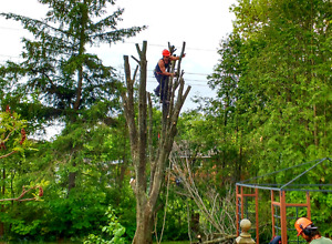 *** GEE'S TREE REMOVAL SERVICE...CALL FOR GREAT SUMMER RATES**