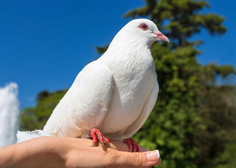 Top 3 Must-Have Items for Pigeon Hobbyists