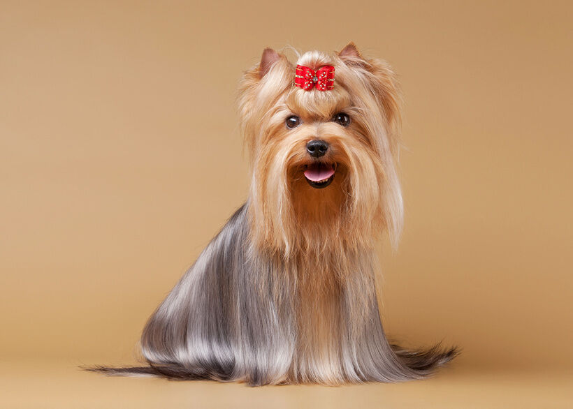 Best Selling Dog Hair Bows