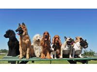 Dog walker/sitter available
