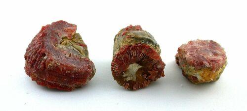 64.2 Gram Three Natural Utah Red Horn Coral Cabochon Cab Gemstone Gem Rough
