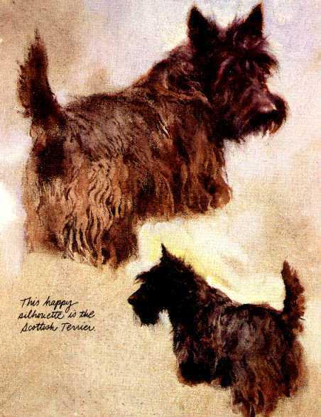 Scottish Terrier - Vintage Dog Art Print - Poortvliet