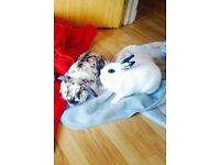 2 rabbits free to a loving home must go together