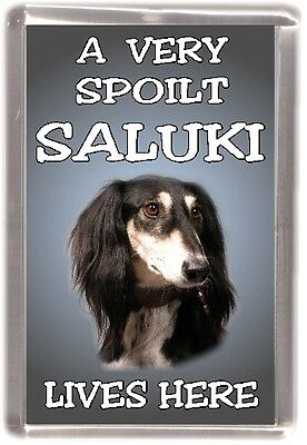 "Saluki Dog Fridge Magnet  ""A VERY SPOILT SALUKI LIVES HERE""  by Starprint"