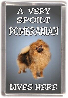 """Pomeranian Dog Fridge Magnet  """"A VERY SPOILT POMERANIAN LIVES HERE"""" by Starprint"""