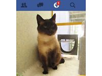 Cat missing for a month -2yrs old female