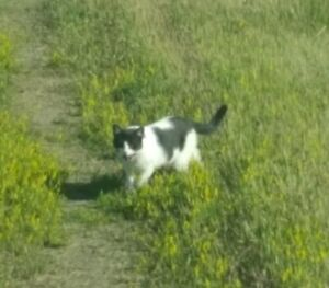 Lost (Black and White) Cat