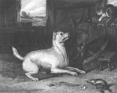 TERRIER DOG GROWLS AT HISSING CAT RAT IN TRAP OLD BARN, 1848 Art Print Engraving