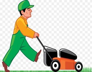 Spring clean up & lawn maintenance best price $25 a lawn