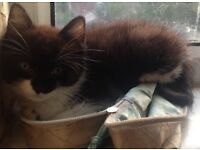 Looking for a good home for a male kitten