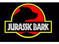 Jurassic bark Dog Walks and Pet Sitter