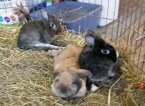 Young rabbits all under 1 year old.