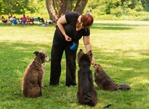 FALL SPECIAL: Private Dog Training