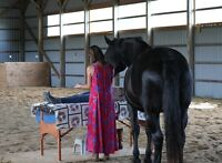 Reiki with or without Horse Healing Energy