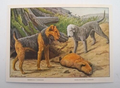 LOUIS FUERTES BEDLINGTON TERRIER AIREDALE TERRIER COLOR LITHO DOG PRINT  1919