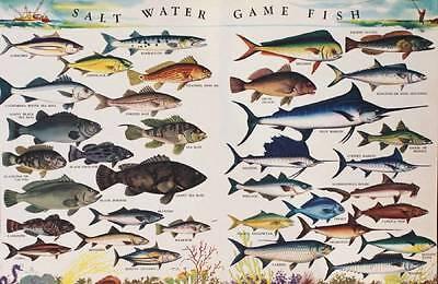 Salt Water Game Fish Vintage Art