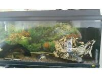 Fish tanks with ornaments and lots more