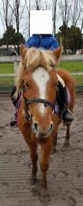 Brilliant kids pony mare for sale Dingley Village Kingston Area Preview