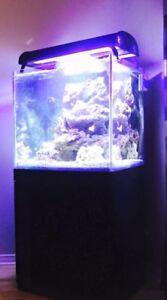 Aquarium eau salée avec meuble et accessoires