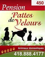 Pension pour chien et chat (sans cage) professionnelle