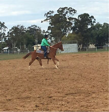 StockHorse Filly Dalby Dalby Area Preview