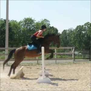 Horseback Riding Lessons - Build Partnership