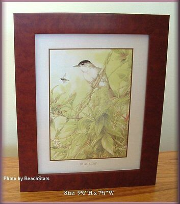 Blackcap Chickadee Framed Print Marjolein Bastin Natures Journey Free U. S. Ship